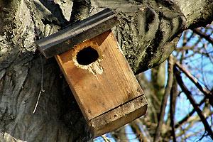 Architektur trifft auf natur das eigene baumhaus - Baumhaus architekturburo ...