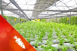 ernährung-klima_artikelbild