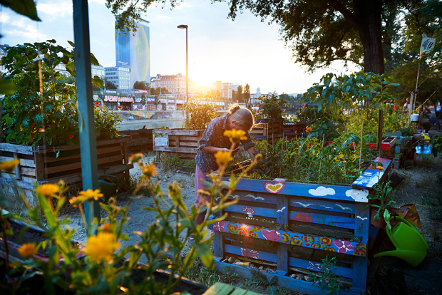 urban gardening in wien energieleben. Black Bedroom Furniture Sets. Home Design Ideas