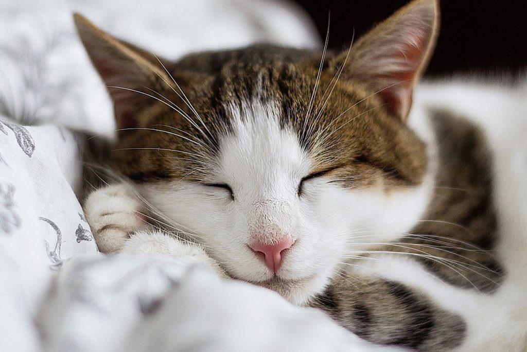 1. Schlafen. wer ausgeschlafen in den Tag startet, ist leistungsfähiger.