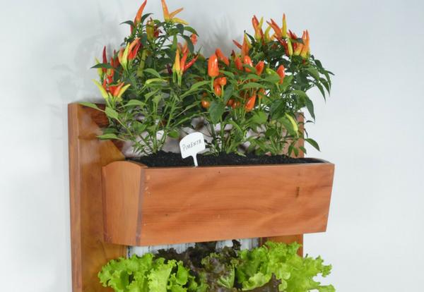 Gemüse im Indoor-Garten