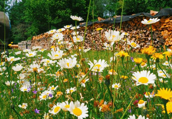 Blumenwiese bei einer Kräuterführung
