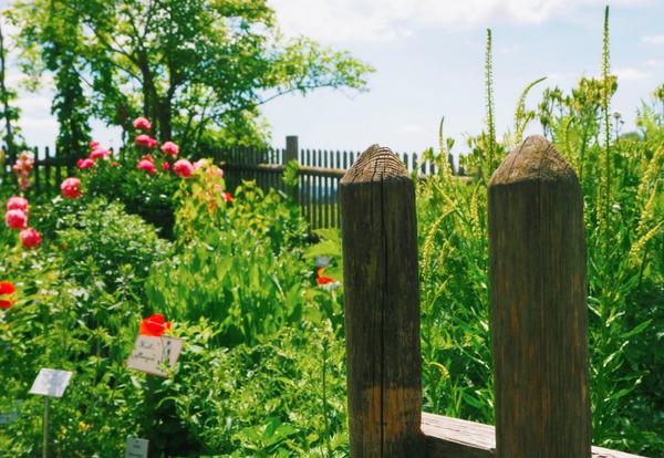 Kräutergarten einer Kräuterhexe