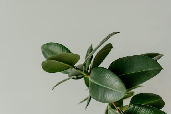 besser atmen und arbeiten mit zimmerpflanzen die. Black Bedroom Furniture Sets. Home Design Ideas