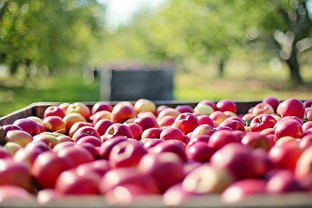 4. Äpfel